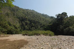 Forest regenerating on slopes formerly covered with coca fields