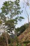Deforestation of a steep hillside [colombia_1603]