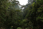 Cloud forest of Chicaque