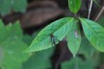 Multicolored wasp