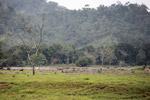 Cattle pasture near Acandi [colombia_1848]