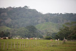 Cattle pasture near Acandi [colombia_1851]