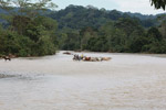Cowboys herding cattle across a river [colombia_2062]