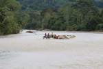 Cowboys herding cattle across a river [colombia_2065]