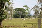 Lowland cattle pasture near Peñaloza