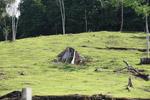 Cattle pasture and rainforest near Peñaloza