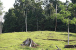 Cattle pasture and rainforest near Peñaloza [colombia_2105]