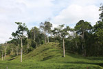 Cattle pasture and rainforest near Peñaloza [colombia_2110]