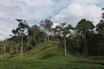 Cattle pasture and rainforest near Peñaloza [colombia_2112]