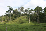 Cattle pasture and rainforest near Peñaloza [colombia_2115]