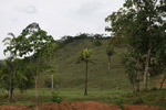 Rainforest cleared for cattle pasture near Peñaloza [colombia_2120]