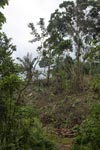 Deforestation in an Embera indigenous forest reserve