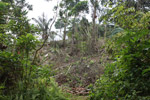 Deforestation by colonos in an Embera indigenous forest reserve