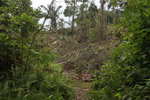 Deforestation by colonists in an Embera indigenous forest reserve