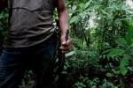 Rainforest hunter