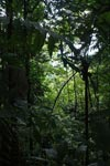 Chocó rainforest [colombia_2162]