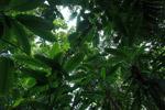 Rainforest of the Darien