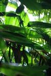 Chocó rainforest [colombia_2186]