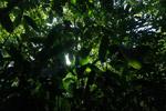 Chocó rainforest [colombia_2187]