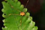 Orange spider [colombia_2199]