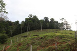 Pasture and forest in Colombia