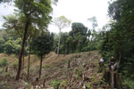 Illegal forest clearing by colonists in an Afro-indigenous reserve [colombia_2363]