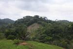 Deforestation for cattle pasture near Chugandi [colombia_2397]