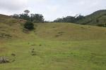 Deforestation for cattle pasture near Chugandi [colombia_2411]