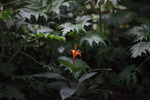 Orange flower [colombia_2431]