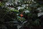 Orange flower [colombia_2431]