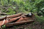 Jungle saw mill