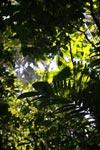 Coastal rainforest of the Darien