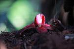 Red rainforest flower