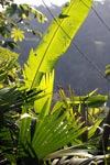 Sunlit rainforest vegetation [colombia_2690]