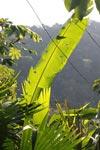 Sunlit rainforest vegetation