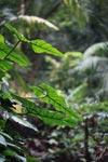 Rainforest vegetation overhanging a creek