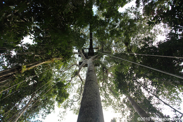 Rainforest canopy platform in Amacayacu National Park, in the Colombian Amazon