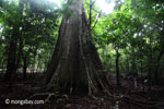 Lowland rain forest in Java's Ujung Kulon