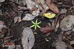 Fallen rainforest flower [java_0119]