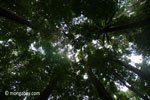 Rainforest canopy of Ujung Kulon