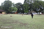 Deer on the grass at Peucang Island camp [java_0130]