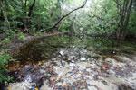 Swamp on Peucang Island [java_0151]