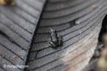 Toad [java_0187]