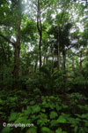 Lowland forest in Ujung Kulon National Park [java_0190]