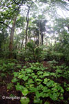 Rainforest in Ujung Kulon National Park