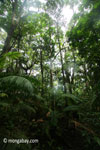 Lowland rainforest in Ujung Kulon National Park [java_0201]