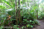 Lowland forest in Ujung Kulon National Park