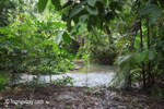 Rainforest stream in Ujung Kulon