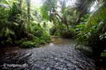 Rainforest creek in Ujung Kulon