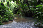 Rain forest stream in Ujung Kulon